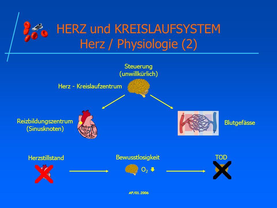 HERZ und KREISLAUFSYSTEM Herz / Physiologie (2)