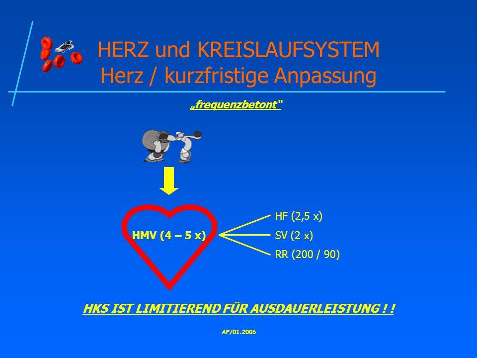 HERZ und KREISLAUFSYSTEM Herz / kurzfristige Anpassung