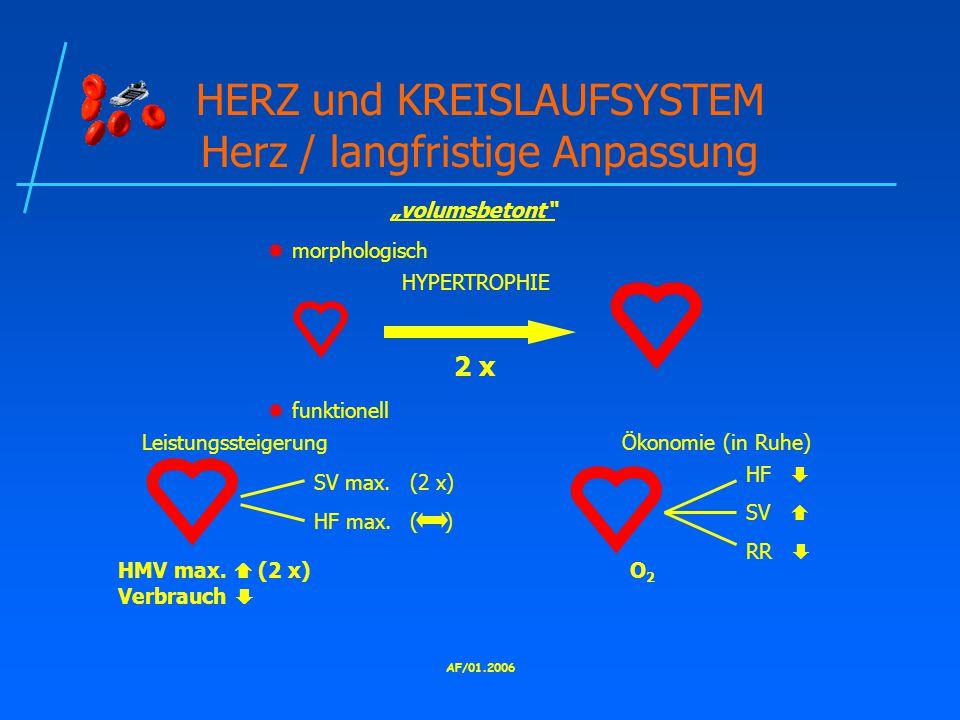 HERZ und KREISLAUFSYSTEM Herz / langfristige Anpassung