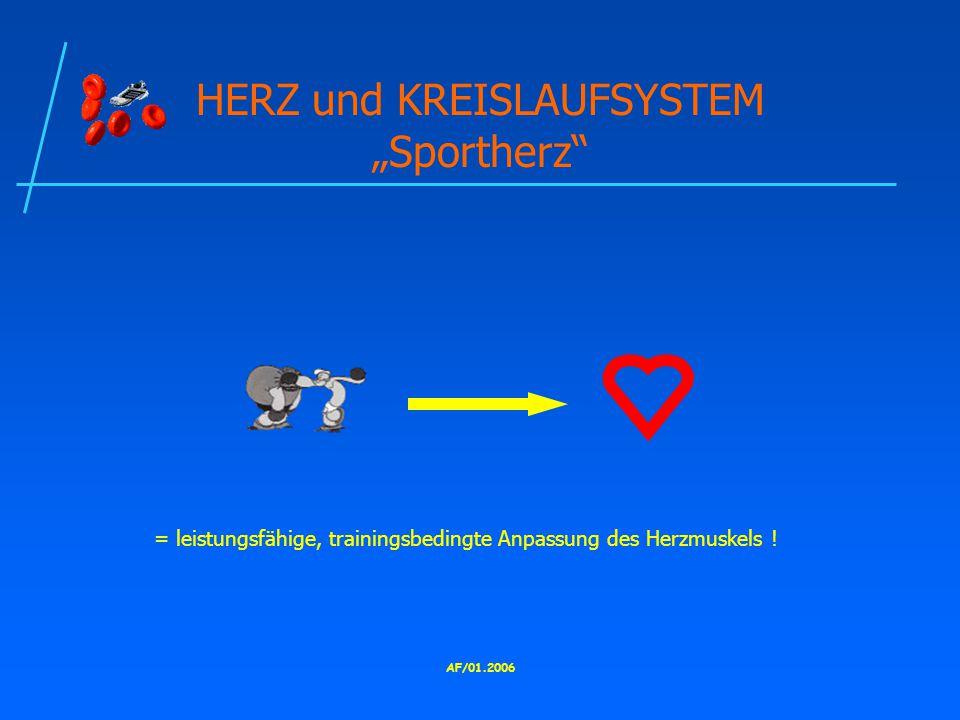 "HERZ und KREISLAUFSYSTEM ""Sportherz"