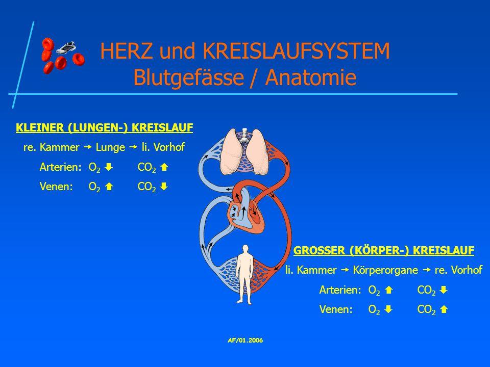 HERZ und KREISLAUFSYSTEM Blutgefässe / Anatomie