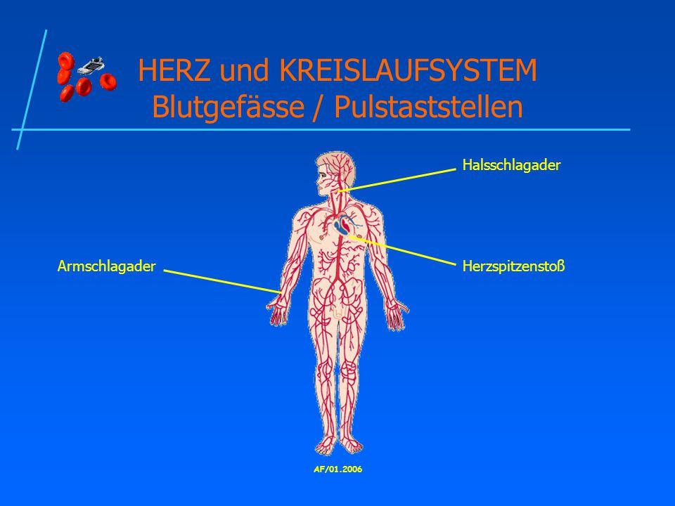 HERZ und KREISLAUFSYSTEM Blutgefässe / Pulstaststellen