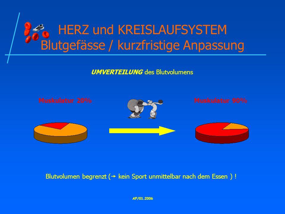 HERZ und KREISLAUFSYSTEM Blutgefässe / kurzfristige Anpassung