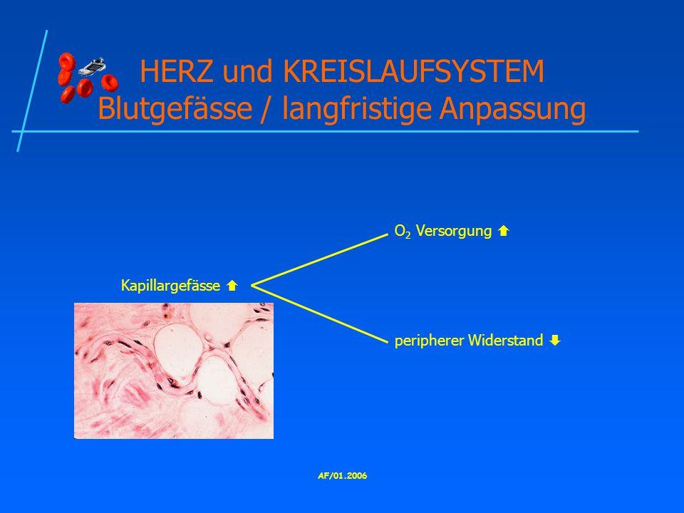 HERZ und KREISLAUFSYSTEM Blutgefässe / langfristige Anpassung