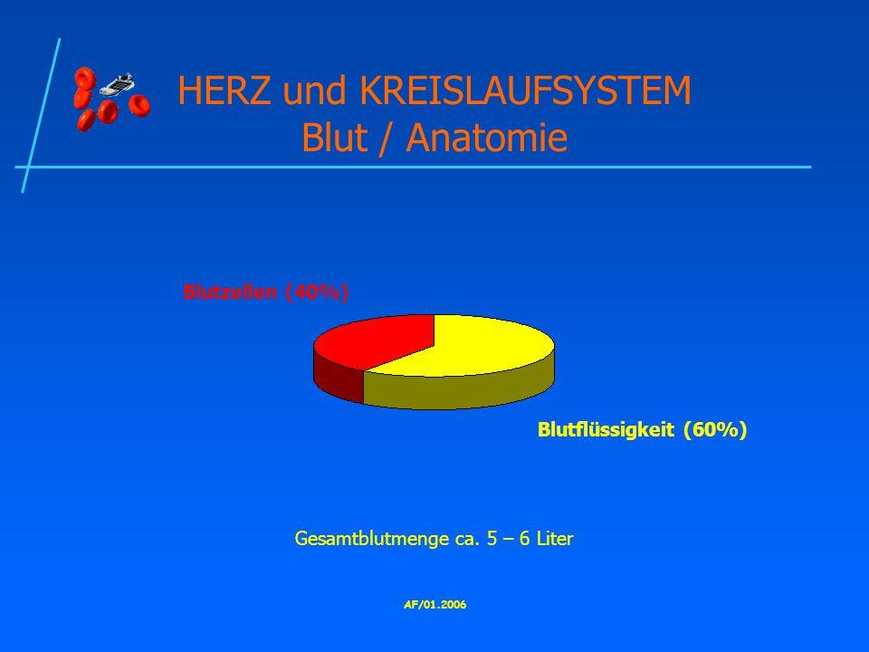HERZ und KREISLAUFSYSTEM Blut / Anatomie
