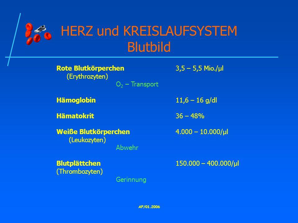 HERZ und KREISLAUFSYSTEM Blutbild