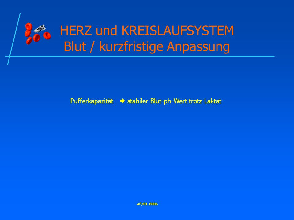 HERZ und KREISLAUFSYSTEM Blut / kurzfristige Anpassung