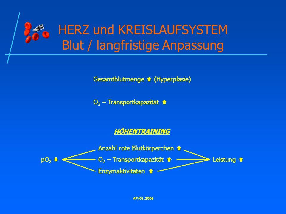 HERZ und KREISLAUFSYSTEM Blut / langfristige Anpassung