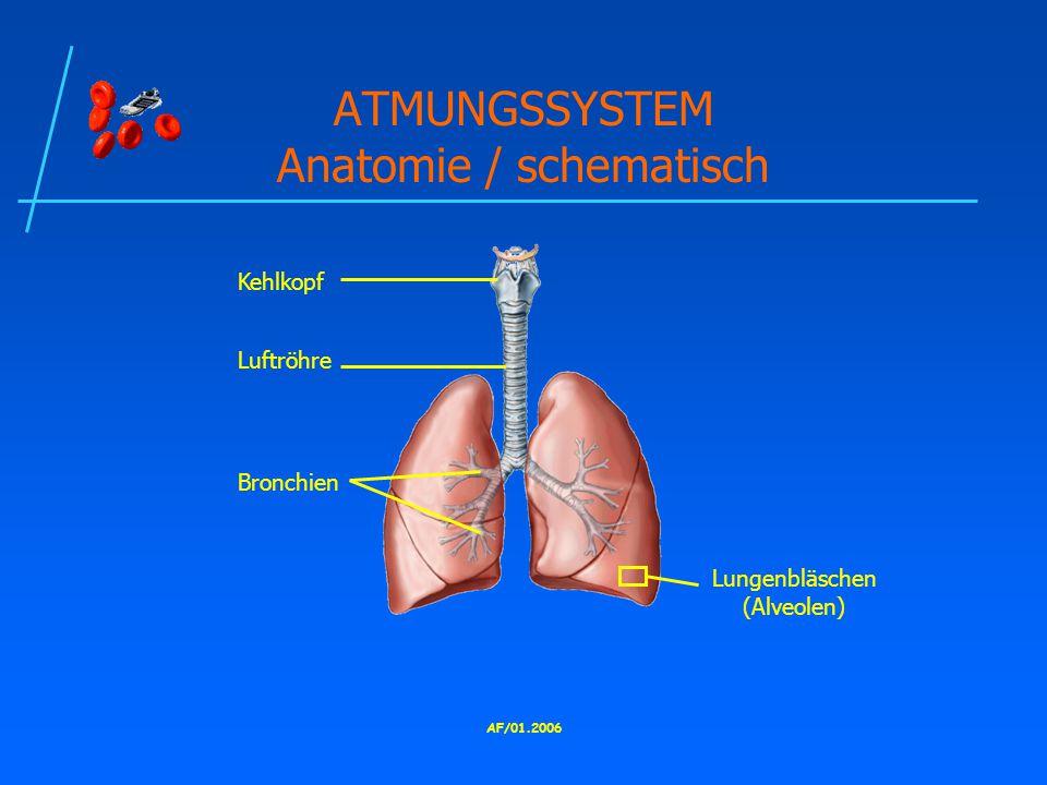ATMUNGSSYSTEM Anatomie / schematisch