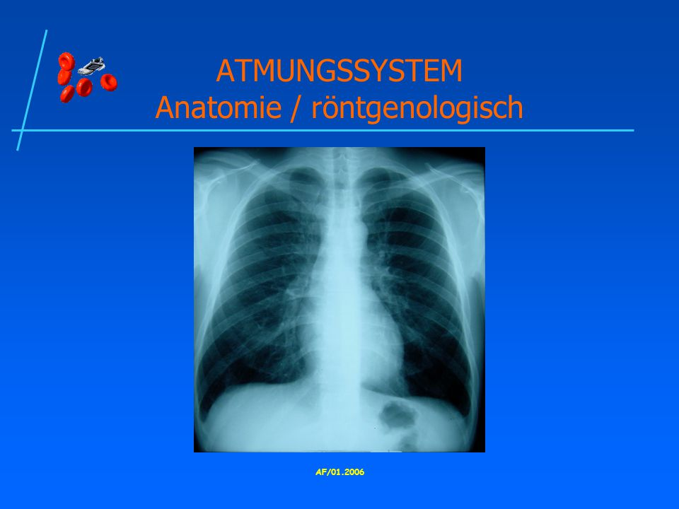 ATMUNGSSYSTEM Anatomie / röntgenologisch