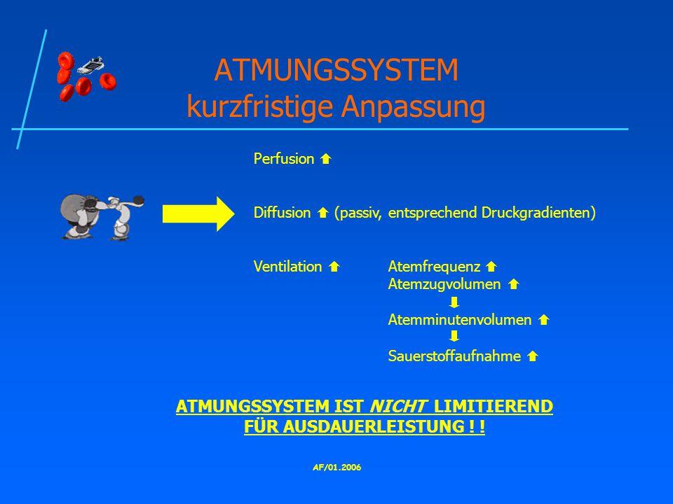 ATMUNGSSYSTEM kurzfristige Anpassung