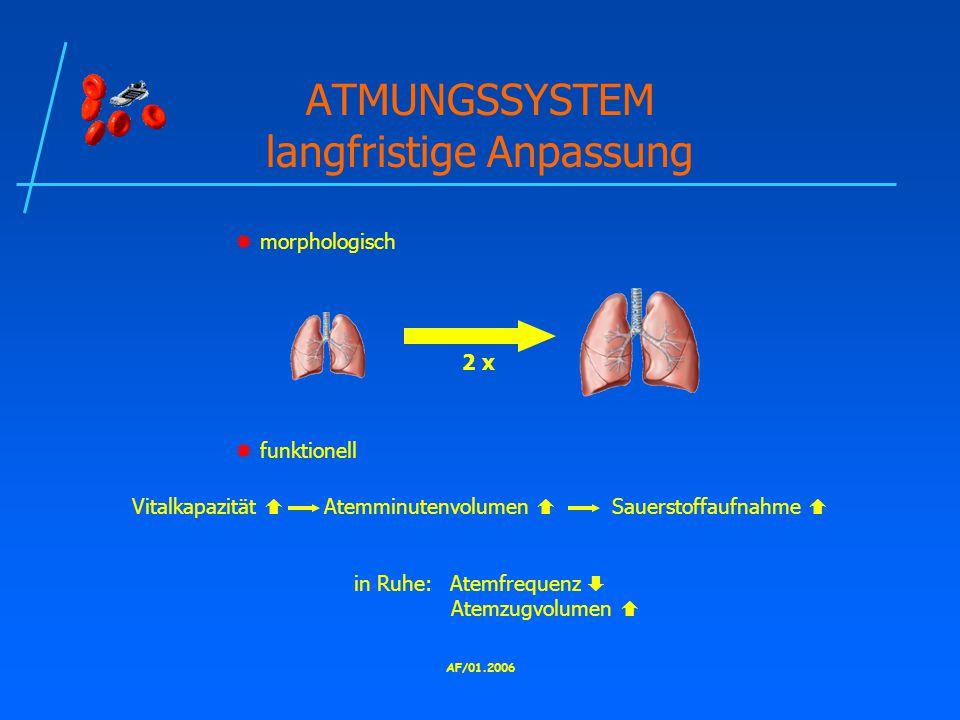 ATMUNGSSYSTEM langfristige Anpassung