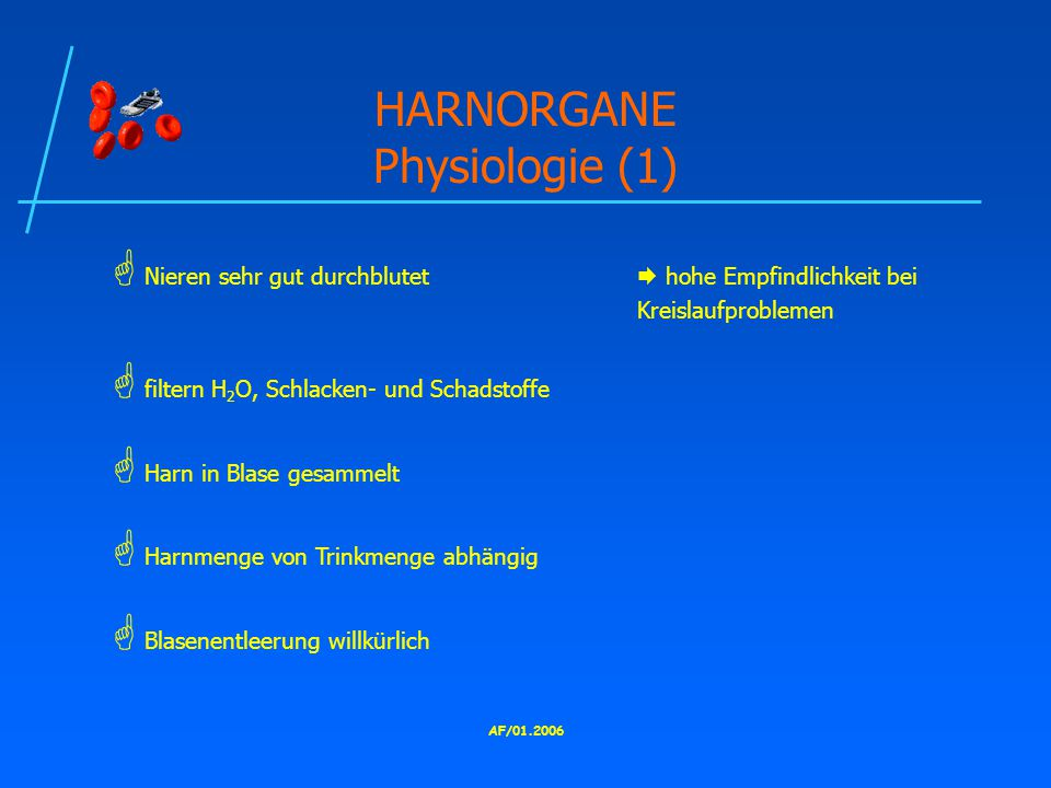 HARNORGANE Physiologie (1)