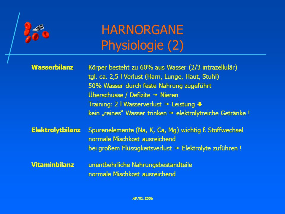 HARNORGANE Physiologie (2)