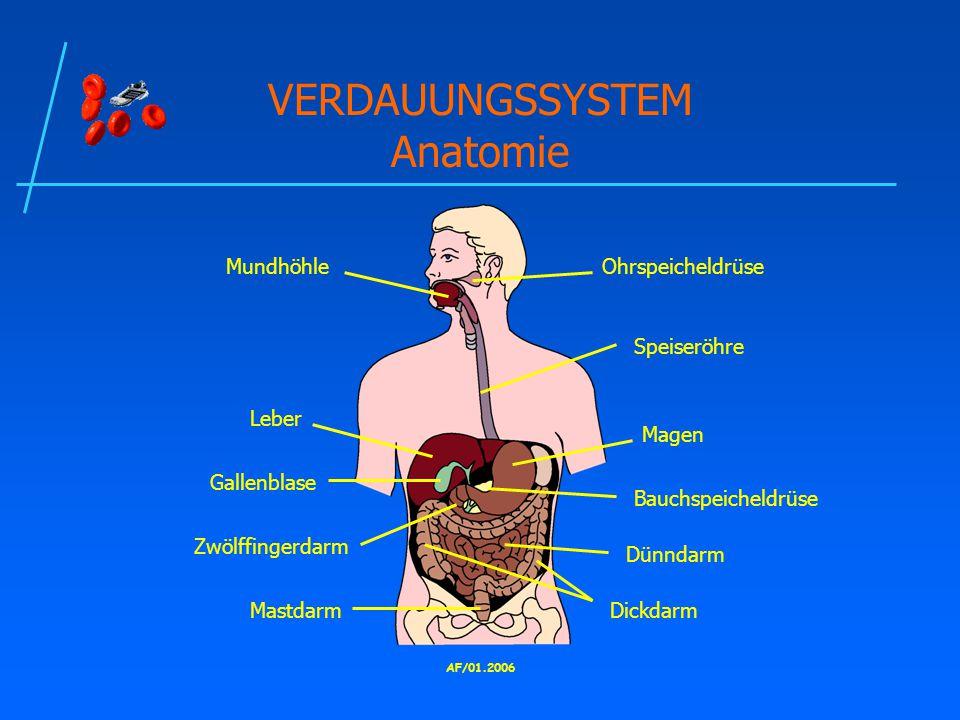 VERDAUUNGSSYSTEM Anatomie