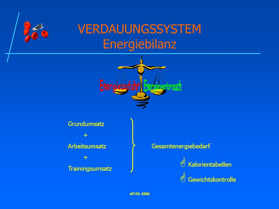 VERDAUUNGSSYSTEM Energiebilanz