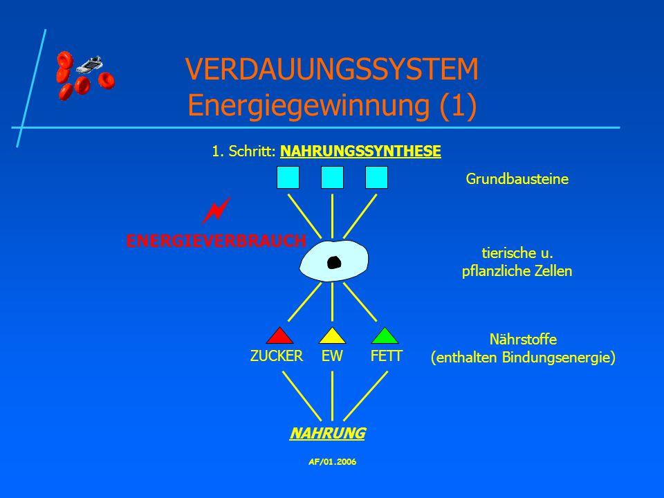 VERDAUUNGSSYSTEM Energiegewinnung (1)
