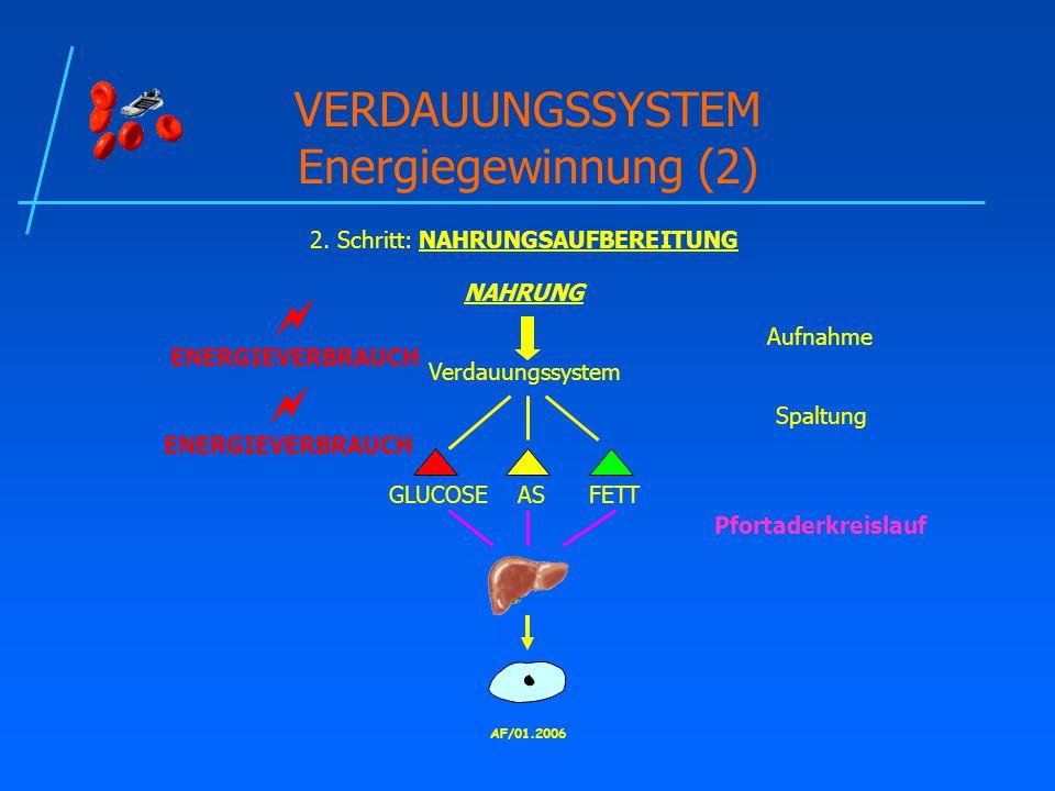 VERDAUUNGSSYSTEM Energiegewinnung (2)