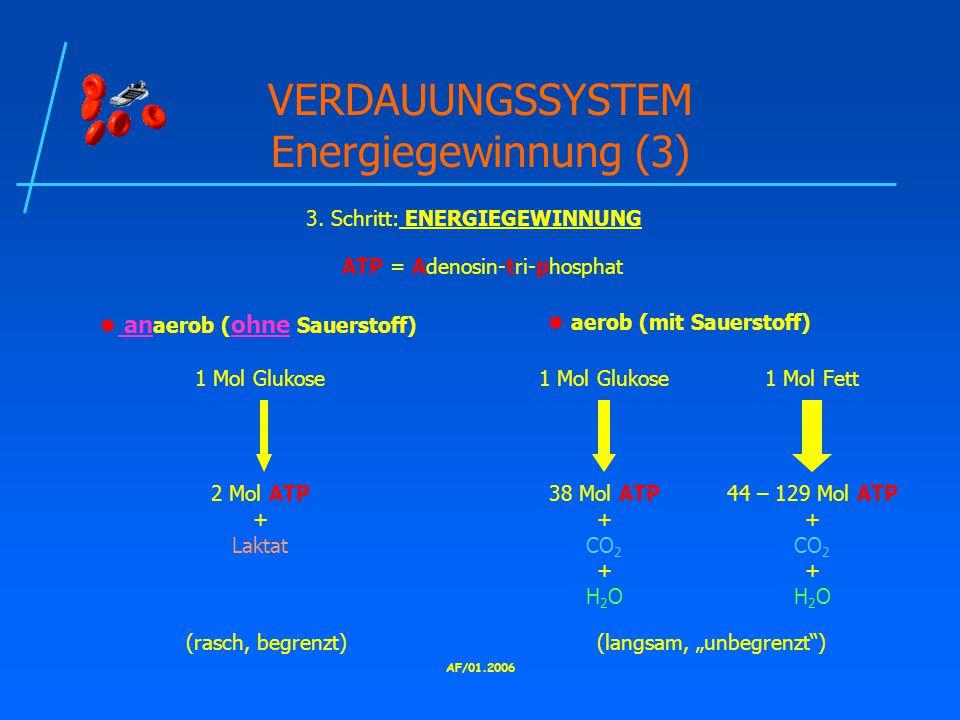VERDAUUNGSSYSTEM Energiegewinnung (3)