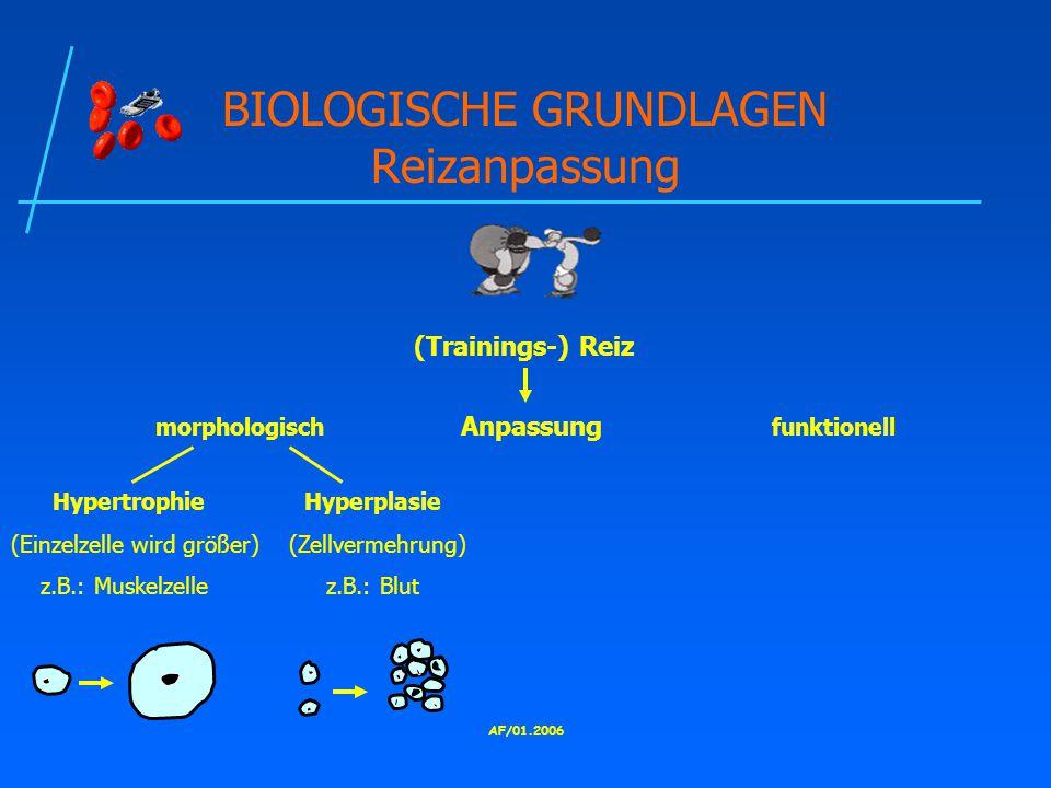 BIOLOGISCHE GRUNDLAGEN Reizanpassung
