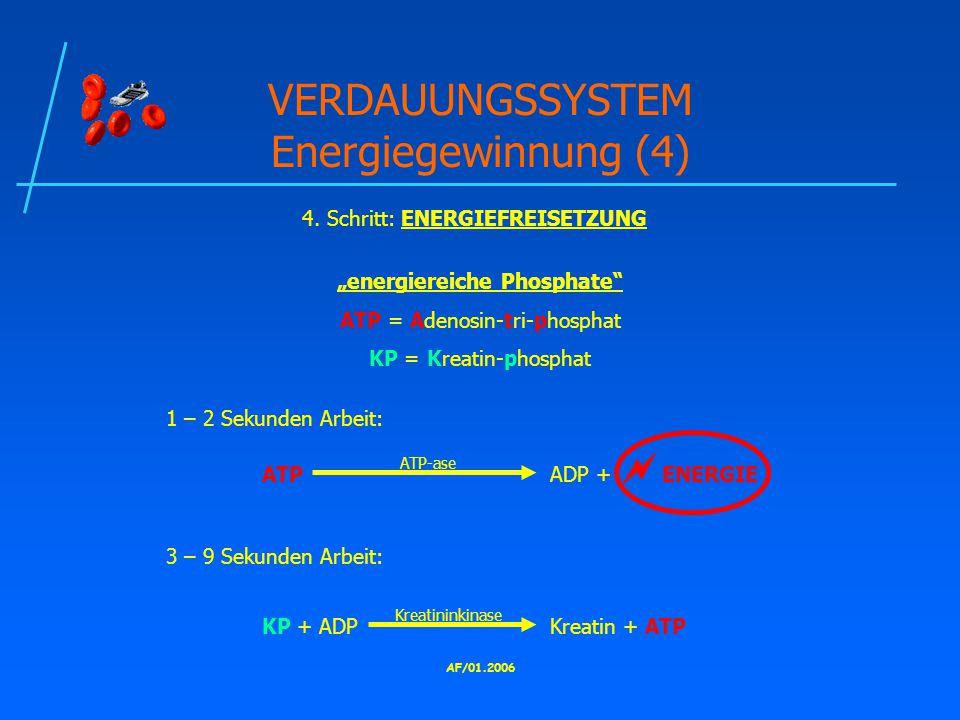 VERDAUUNGSSYSTEM Energiegewinnung (4)