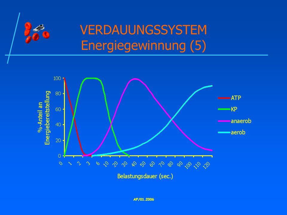 VERDAUUNGSSYSTEM Energiegewinnung (5)