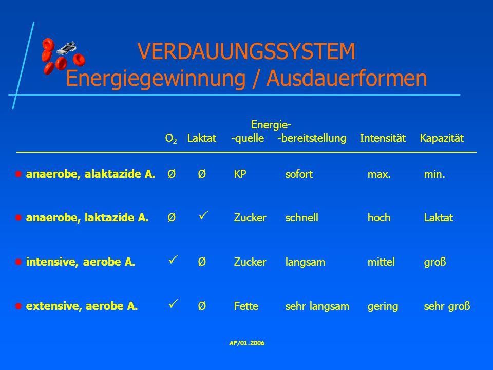 VERDAUUNGSSYSTEM Energiegewinnung / Ausdauerformen