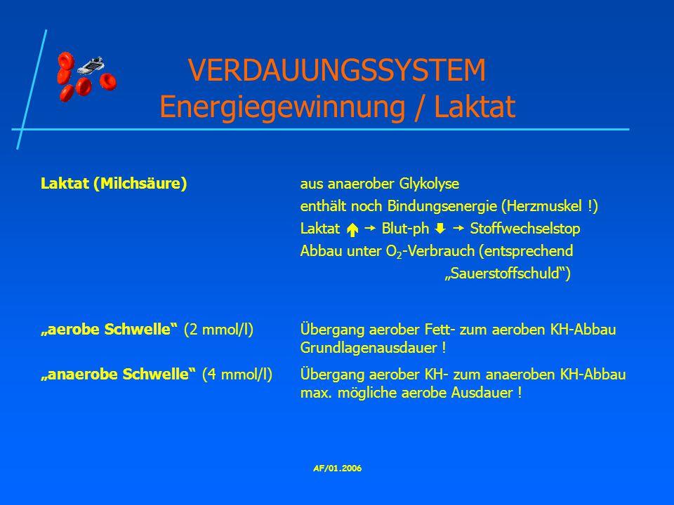 VERDAUUNGSSYSTEM Energiegewinnung / Laktat