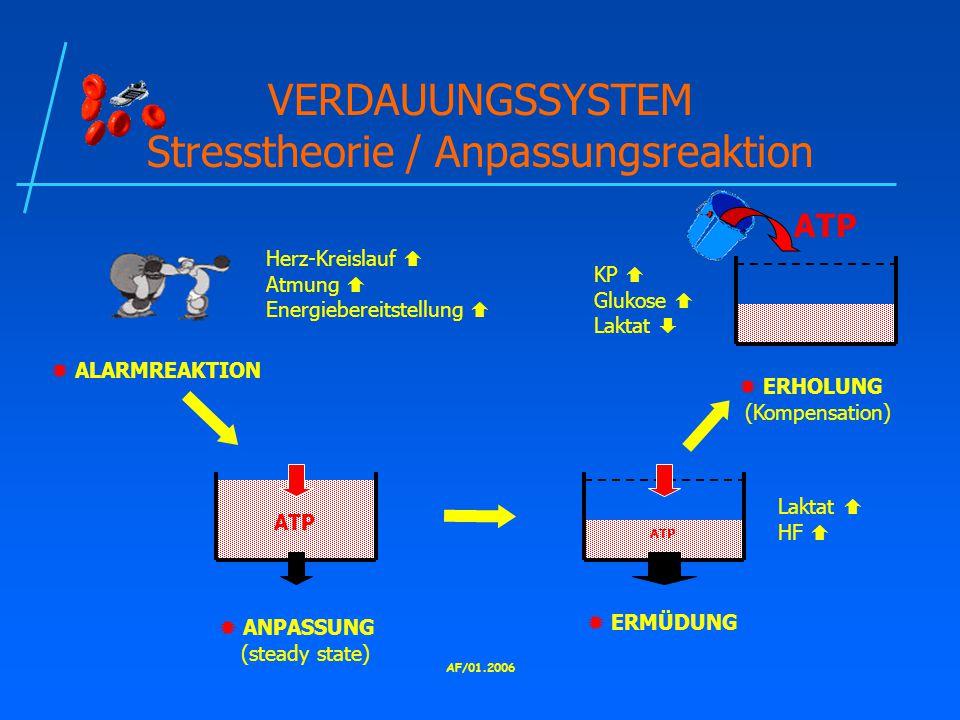 VERDAUUNGSSYSTEM Stresstheorie / Anpassungsreaktion