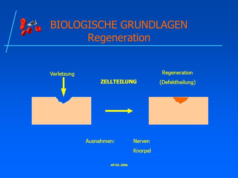 BIOLOGISCHE GRUNDLAGEN Regeneration