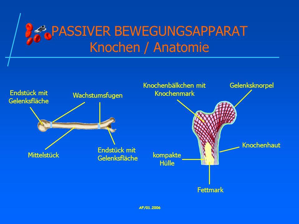 PASSIVER BEWEGUNGSAPPARAT Knochen / Anatomie