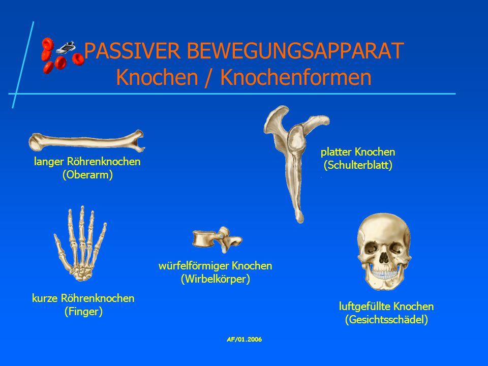 PASSIVER BEWEGUNGSAPPARAT Knochen / Knochenformen