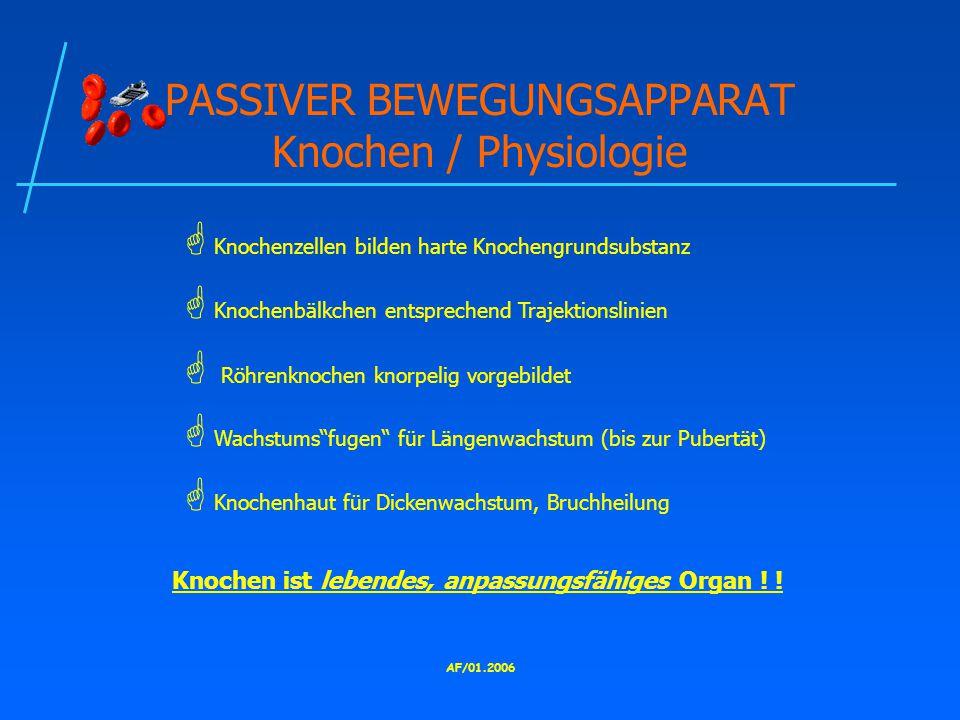 PASSIVER BEWEGUNGSAPPARAT Knochen / Physiologie