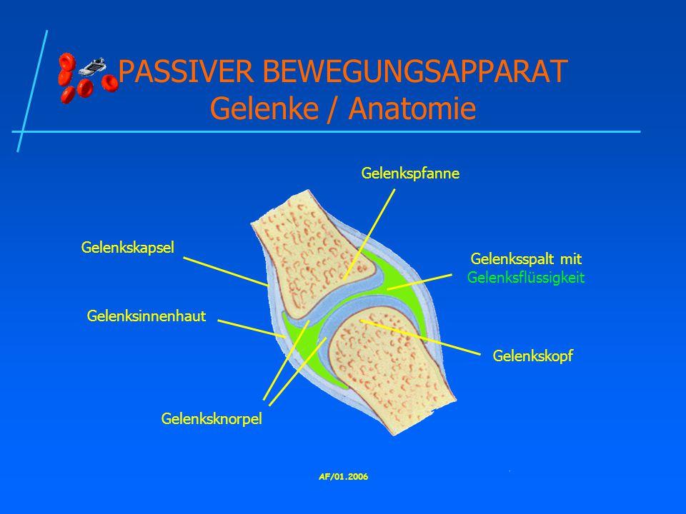 PASSIVER BEWEGUNGSAPPARAT Gelenke / Anatomie