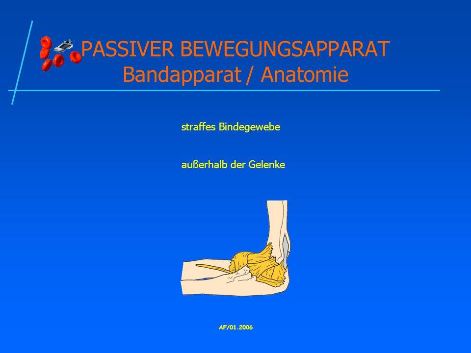 PASSIVER BEWEGUNGSAPPARAT Bandapparat / Anatomie