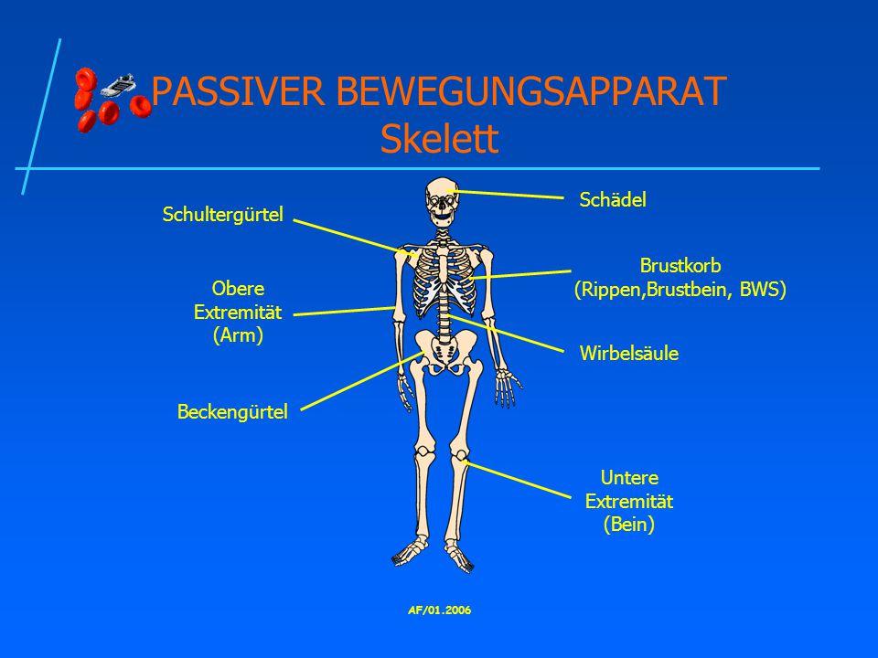 PASSIVER BEWEGUNGSAPPARAT Skelett