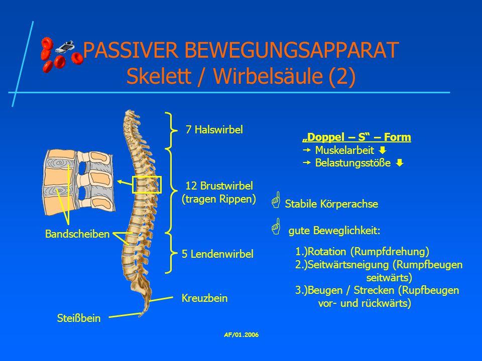 PASSIVER BEWEGUNGSAPPARAT Skelett / Wirbelsäule (2)