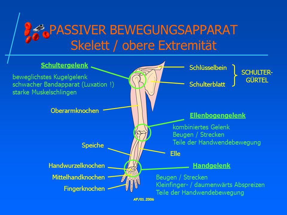 PASSIVER BEWEGUNGSAPPARAT Skelett / obere Extremität