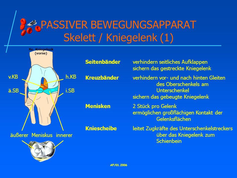 PASSIVER BEWEGUNGSAPPARAT Skelett / Kniegelenk (1)