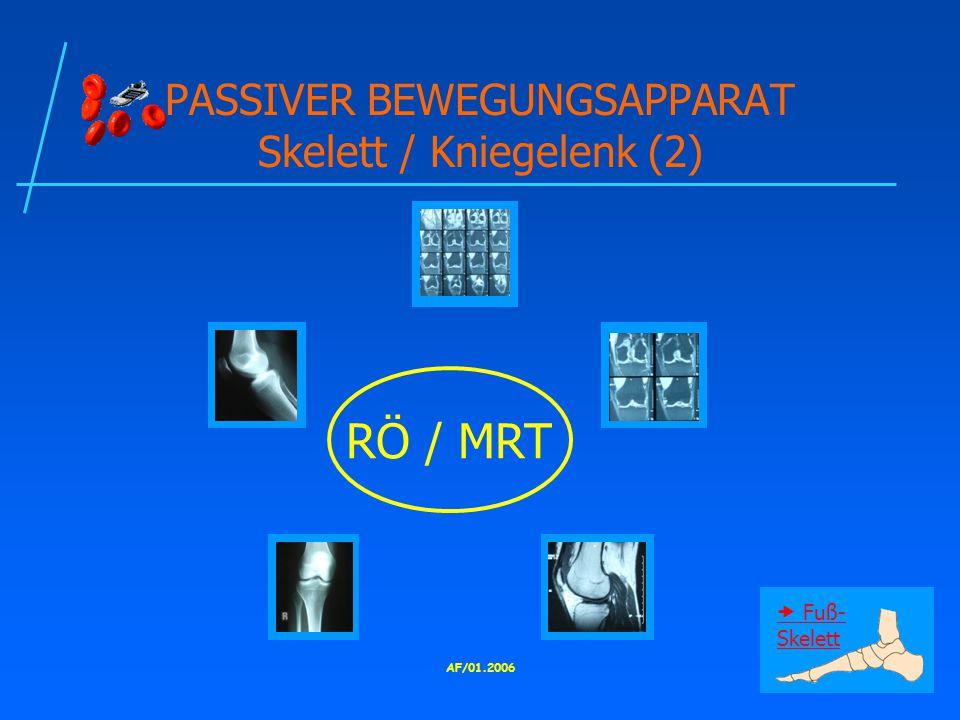 PASSIVER BEWEGUNGSAPPARAT Skelett / Kniegelenk (2)