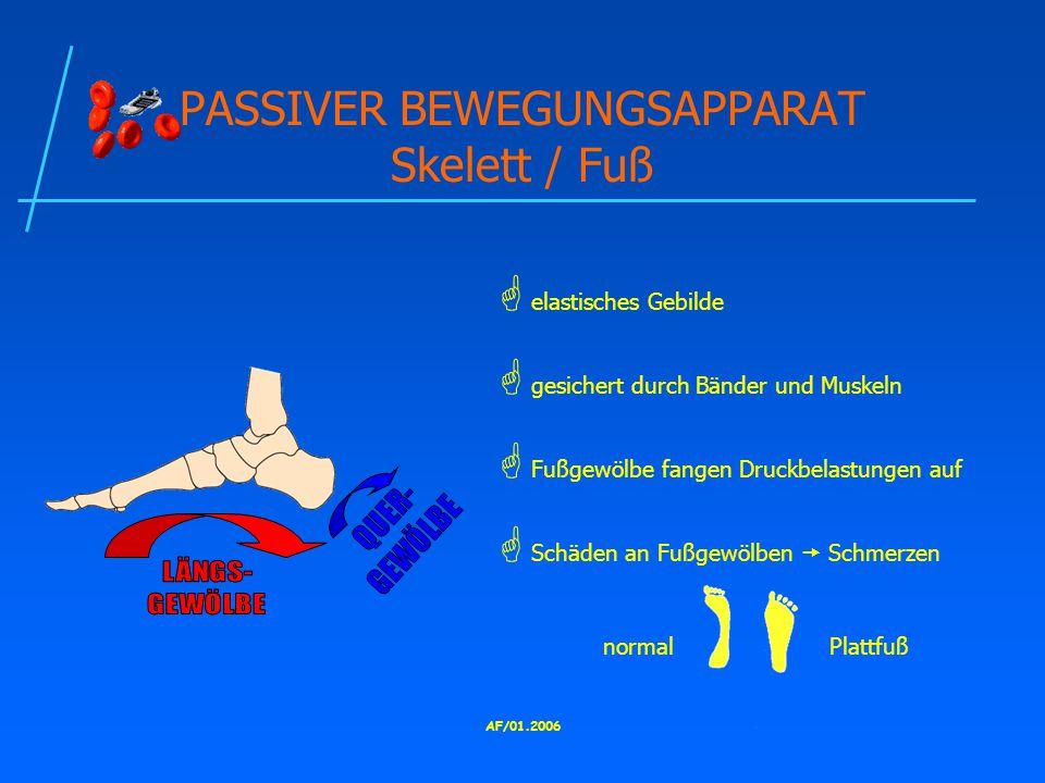 PASSIVER BEWEGUNGSAPPARAT Skelett / Fuß