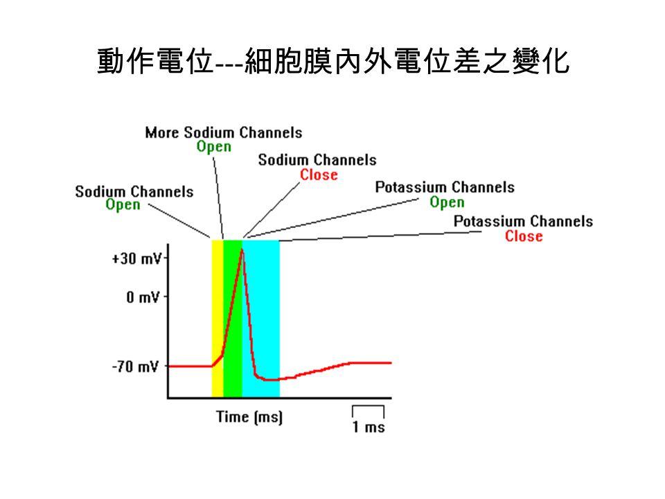 動作電位---細胞膜內外電位差之變化
