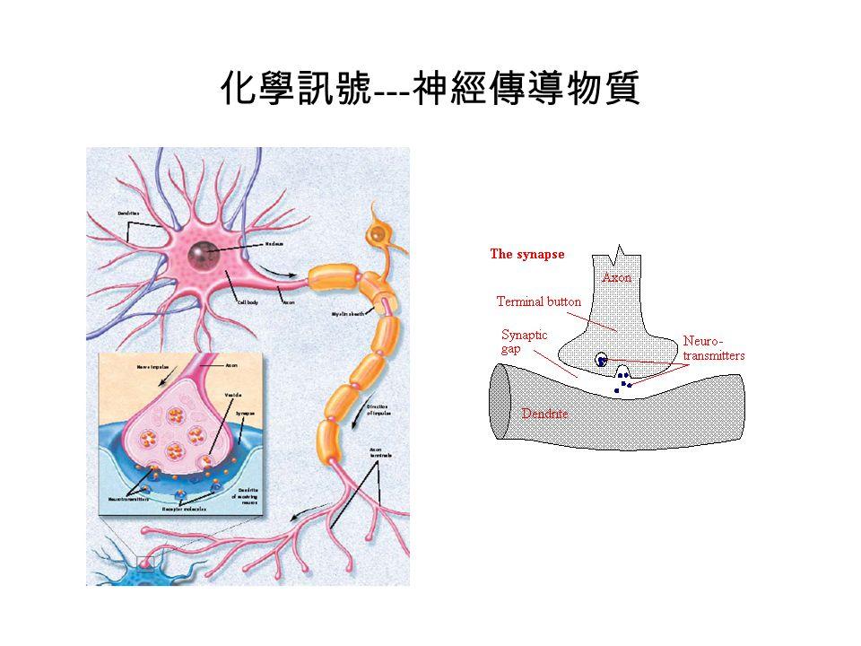 化學訊號---神經傳導物質