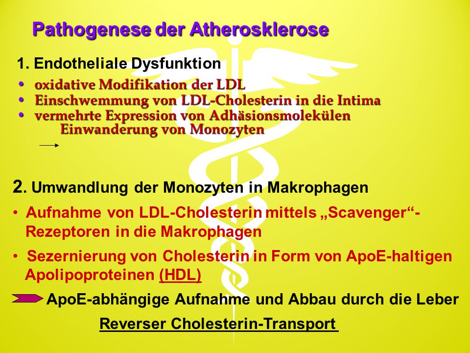 Pathogenese der Atherosklerose