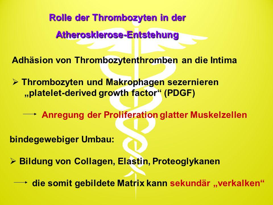 Rolle der Thrombozyten in der Atherosklerose-Entstehung