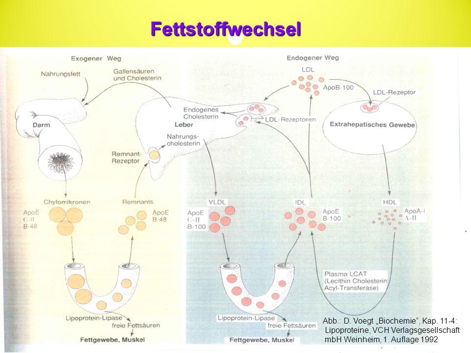 """Fettstoffwechsel Abb.: D. Voegt """"Biochemie , Kap. 11-4:"""