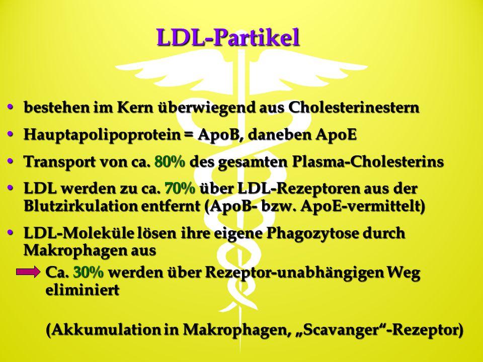 LDL-Partikel bestehen im Kern überwiegend aus Cholesterinestern