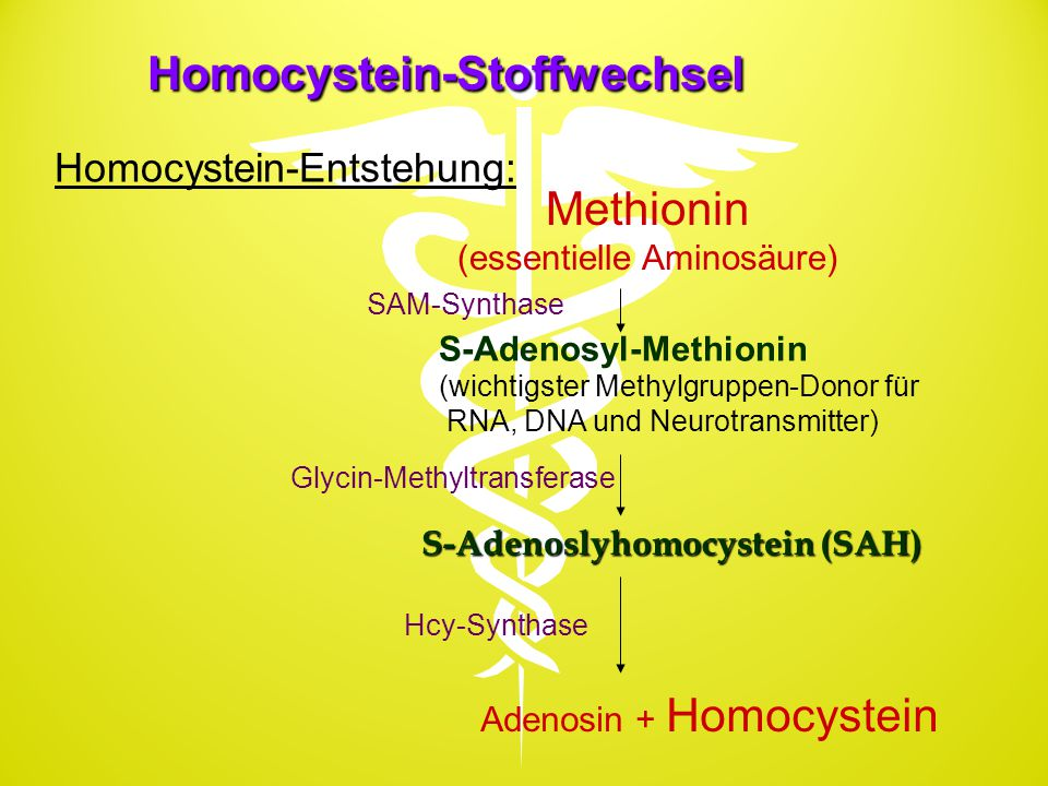Homocystein-Stoffwechsel