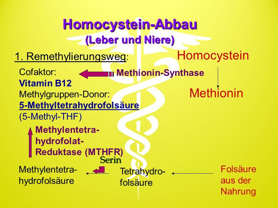 Homocystein-Abbau (Leber und Niere)
