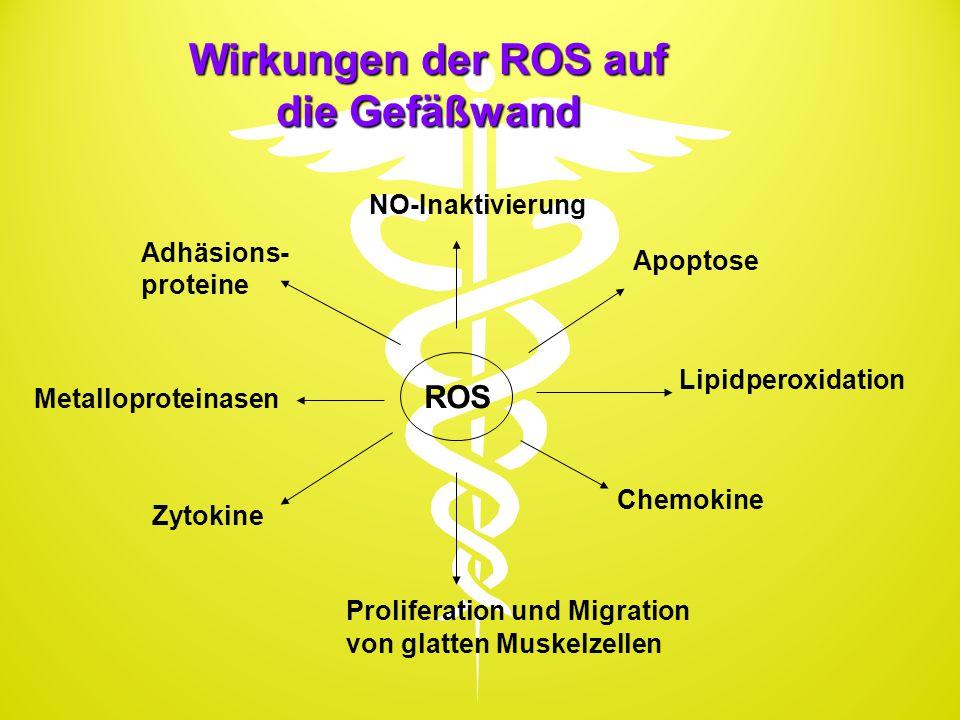 Wirkungen der ROS auf die Gefäßwand